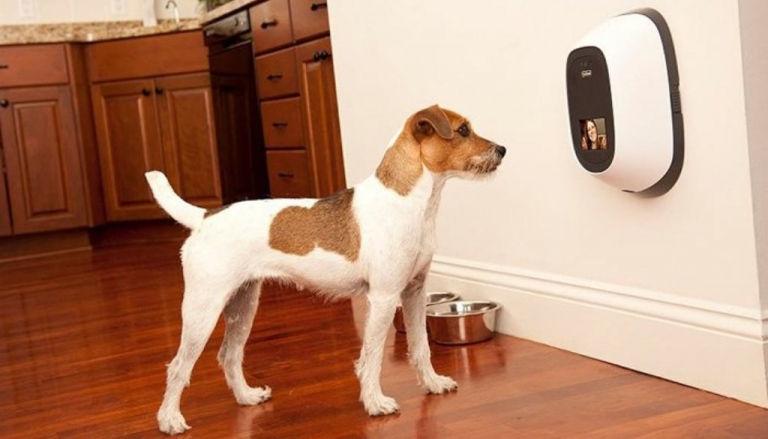 Vuoi videochiamare il tuo amico a quattro zampe a casa? Ora puoi farlo